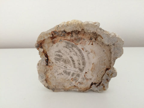 Fossil Wood Madagascar Polished Round 7in - Paradise Crow -  Natural Design & Interiors