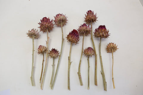 5 x Dried Artichoke Flowers - Large - Dried Flowers - Floral Supplies - Real Fl - Paradise Crow -  Natural Design & Interiors