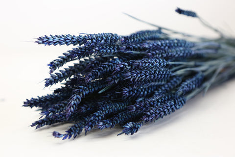 Blue/Purple  Wheat Sheaf -  40-40cm - Naural Flroal Supplies -Dried Flowers - Bo - Paradise Crow -  Natural Design & Interiors
