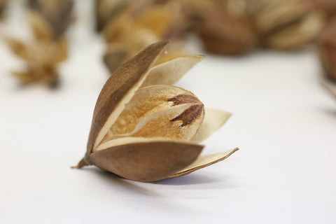 10 x  Dried Lily Flowers - Natural Floral and craft -nuts, seeds and pods.  Natu - Paradise Crow -  Natural Design & Interiors