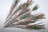 Stunning Natural Peacock Feathers - Paradise Crow -  Natural Design & Interiors