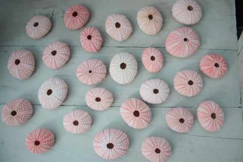 Sea Urchin Pink - 3.5-5cm - Beach Decor   - Natural decor - Paradise Crow -  Natural Design & Interiors