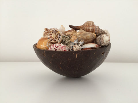 Unique Sea Shell Collection in Coconut Half - Natural Home Decoration - Sea life - Paradise Crow -  Natural Design & Interiors
