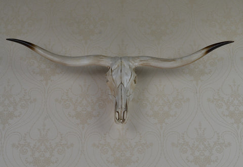 wall mounted longhorn ox skull wall art plaque hunt sculpture-faux taxidermy modern hanging home decor ornamnent - Paradise Crow -  Natural Design & Interiors