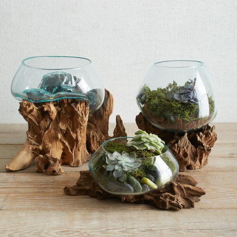 Glass and Driftwood terrarium vases / bowls - Hand blown recycled glass and sustainable teak Active Photos - Paradise Crow -  Natural Design & Interiors
