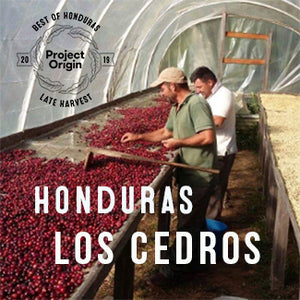 Best of Honduras Late Harvest 2019: LOS CEDROS - Natural - Cloud Catcher Coffee Roastery