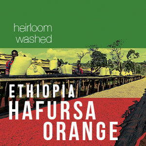 Ethiopia HAFURSA ORANGE - Washed - Cloud Catcher Coffee Roastery
