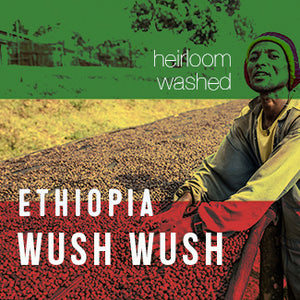 Ethiopia Keffa WUSH WUSH - Washed - Cloud Catcher Coffee Roastery