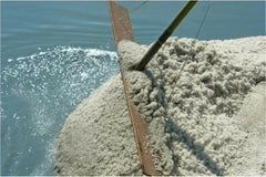 Raking French Grey Sea Salt in Guerande France