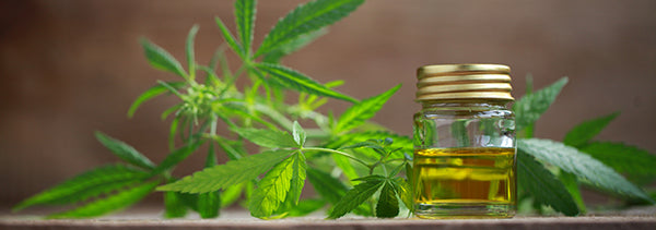 An Introduction to CBD Oil