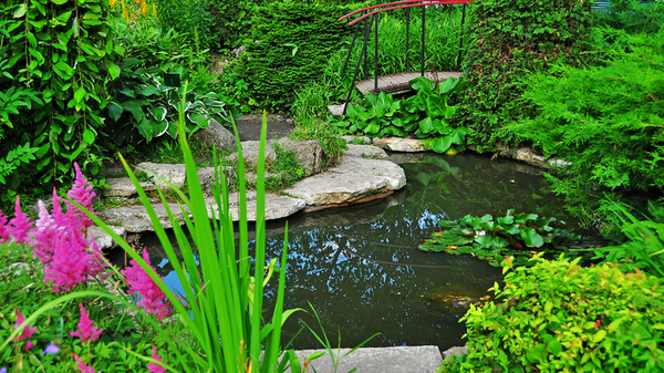 Basic Landscape Design Tips