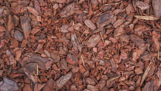 Why You Need Mulch for Your Garden