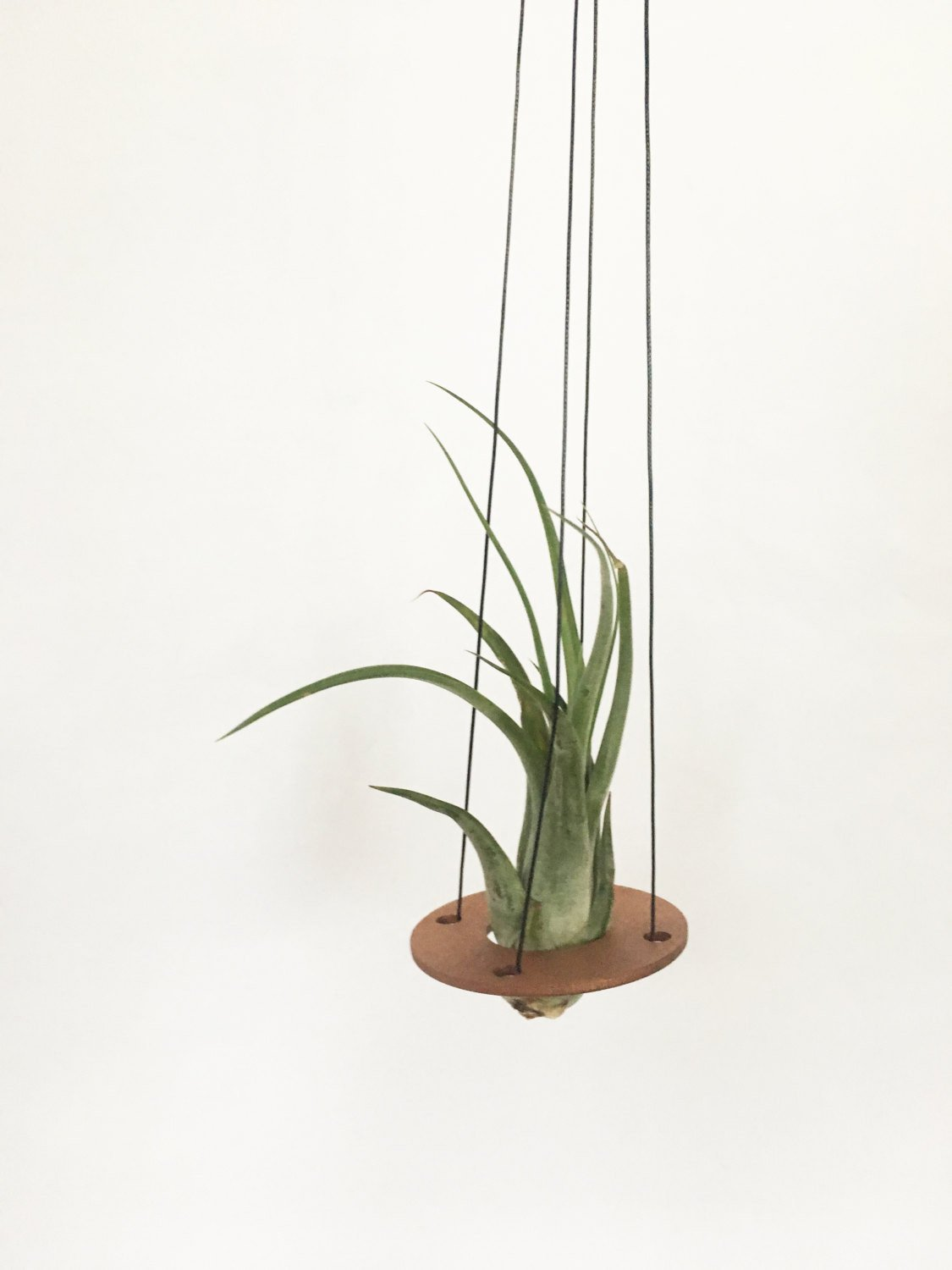 Savvie Studio - Air Plant Hanger >> Minimal Design >> Copper >> Plant Included
