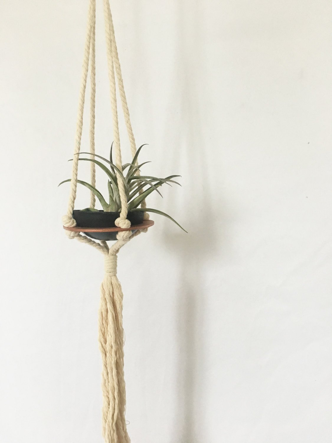 Savvie Studio - Air Plant Hanger >> Single >> Plant Included