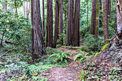 Hike of the Week: Skyline-to-the-Sea Trail