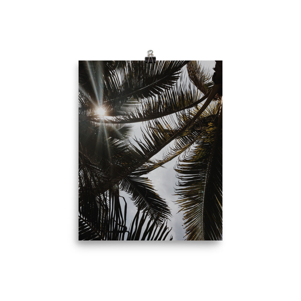 Puerto Escondido Palm Trees Photo paper poster