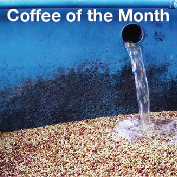 Coffee of the Month - Mandheling