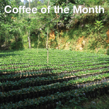 Coffee of the Month - San Antonio Huista