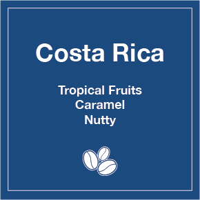 Costa Rica Los Lobos (Wholesale) - 16 oz Wholesale Bag / Whole Beans - Tico Coffee Roasters