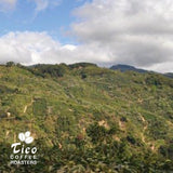 Costa Rica La Minita - Tico Coffee Roasters