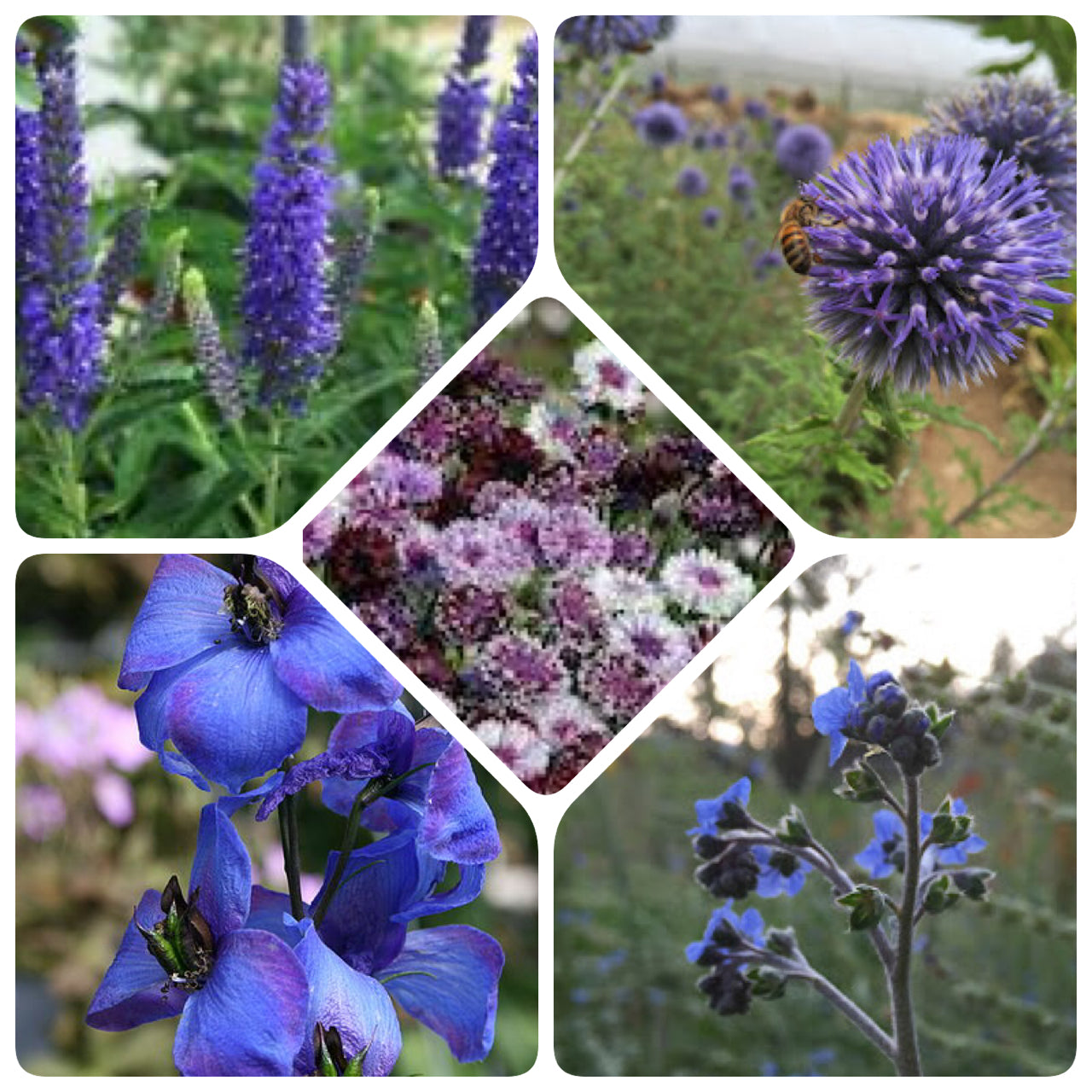 Grow Your Own Wedding Flowers: Bachelor's Button