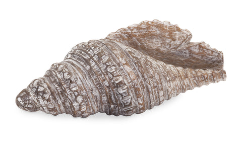 Distressed Albasia Wood Carved Seashell