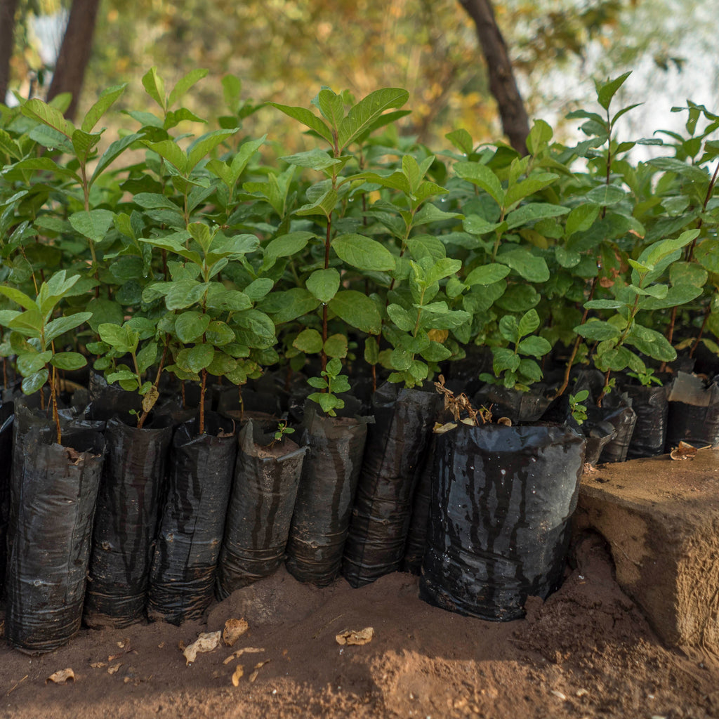 Westbeach helps Trees for the Future reach 200 million tree mark