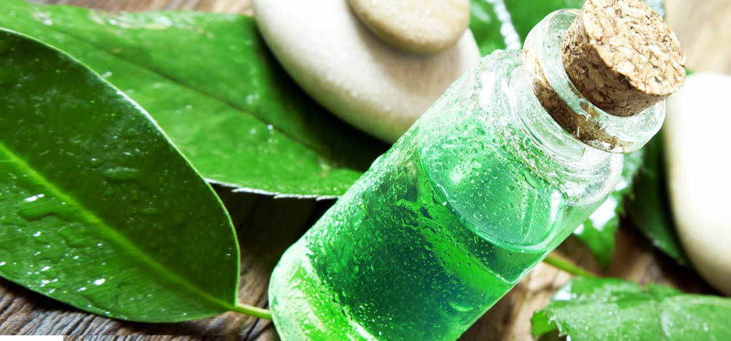 Top 21 Uses for Tea Tree Oil