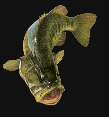 an illustration of a large mouth bass on a black background