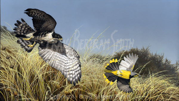 a painting of a black sparrow hawk chasing a bokmackierie over dry African grass veld