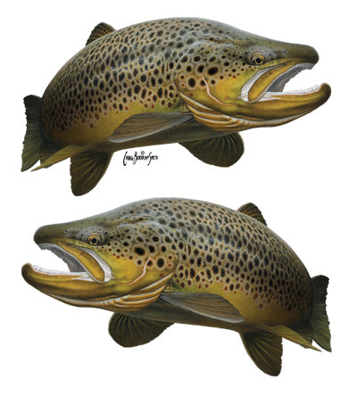 brown trout sticker or decal