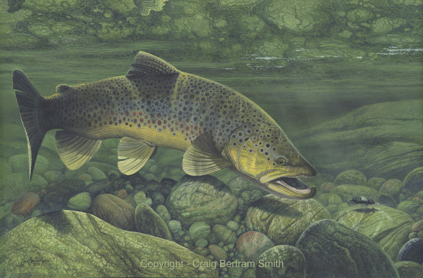 a painting of a brown trout about to take a fly