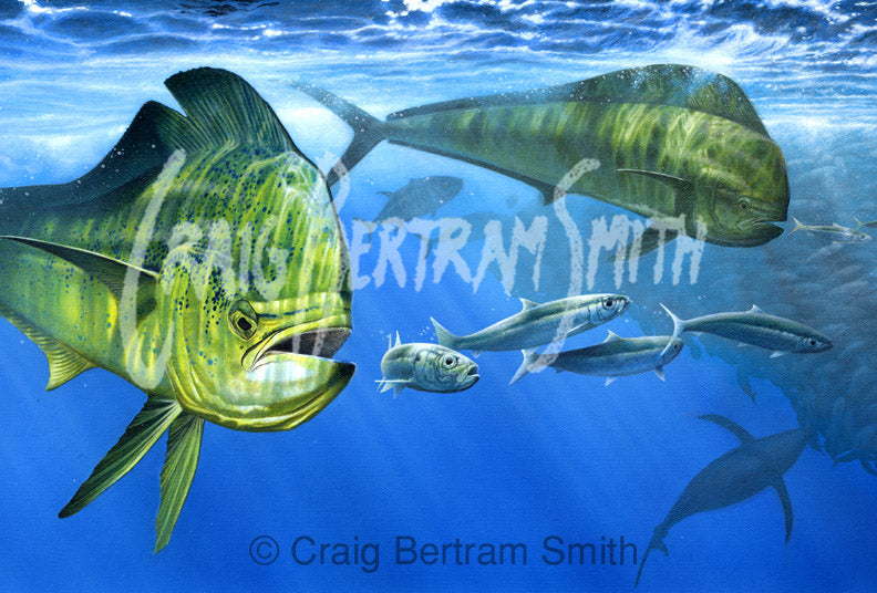 a painting of dorado feeding at a large bait ball with tuna and sailfish in the background