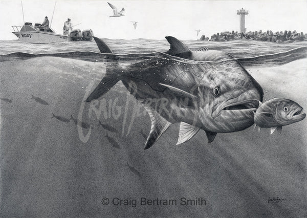 a pencil drawing of a leerie chasing a shad at the port elizabeth harbour