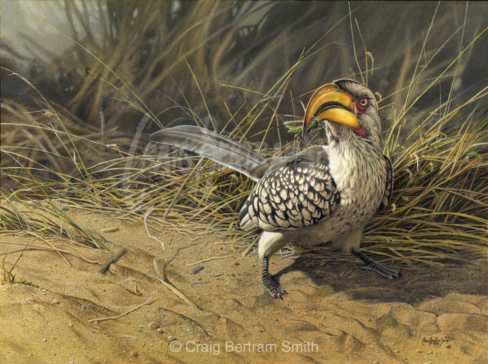 a painting of a yellow billed hornbill feeding on a sandy bed