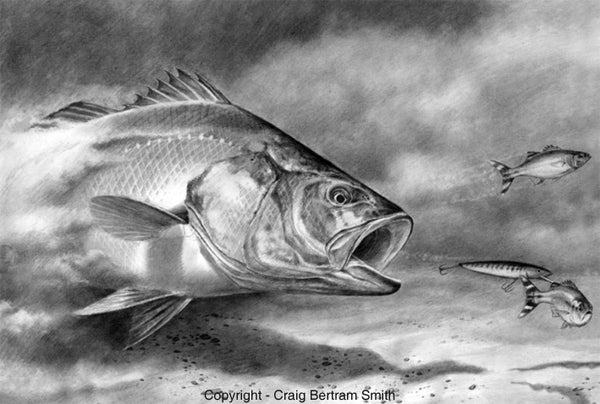 a pencil drawing of a kabeljou chasing a lure