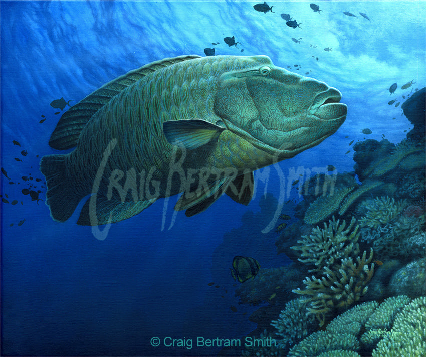 a painting of a large napoleon wrasse along side a coral reef
