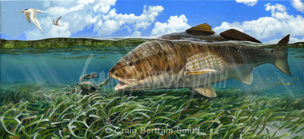 A painting of a redfish or red drum about to eat a blue swimming crab in shallow sea grass