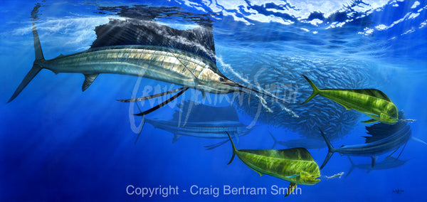a painting of sailfish and dorado hunting bait fish around a bait ball