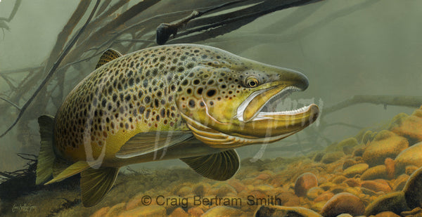 a painting of a brown trout swimming over the rocky river bed