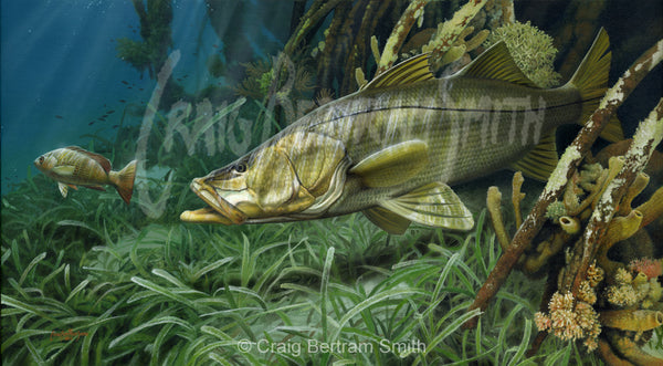 a painting of a snook in the mangrove roots chasing a snapper