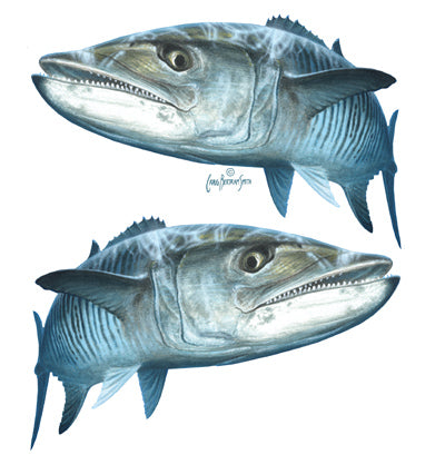 king mackerel sticker or decal