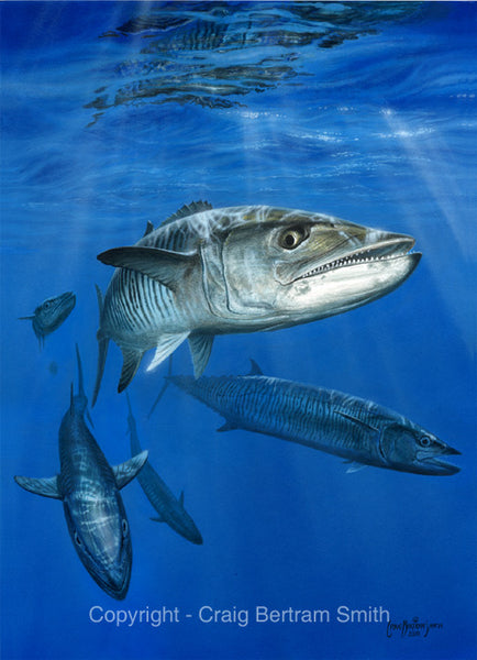 a painting of a spanish mackerel swimming underwater