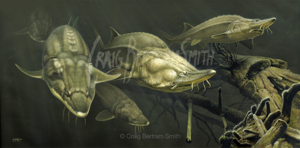 a painting commission of baluga sturgeon underwater