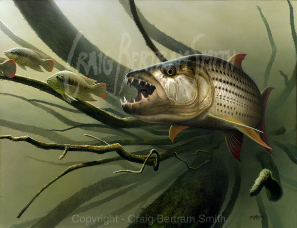 a painting of a tigerfish chasing bream with a sunken tree in the background