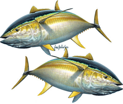 yellowfin tuna sticker or decal