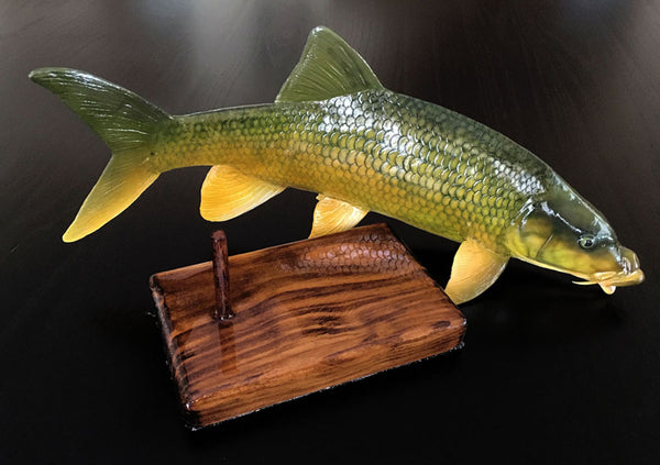 Smallmouth Yellowfish Replica