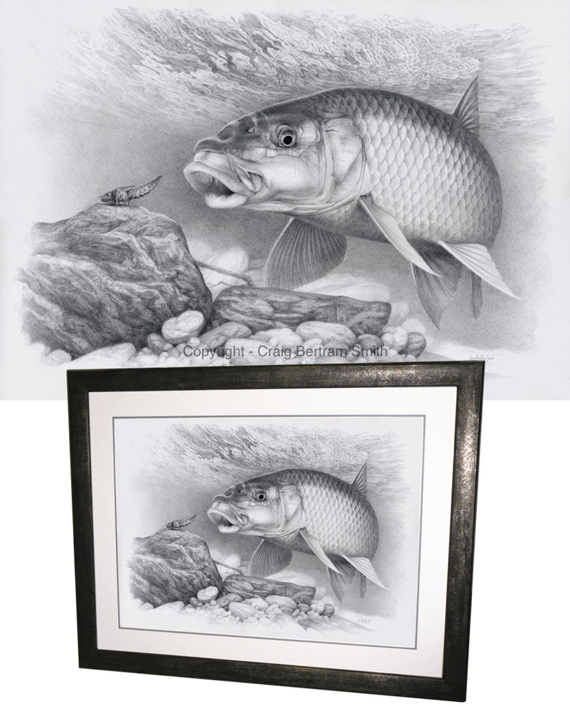 a pencil drawing of a small scale yellowfish