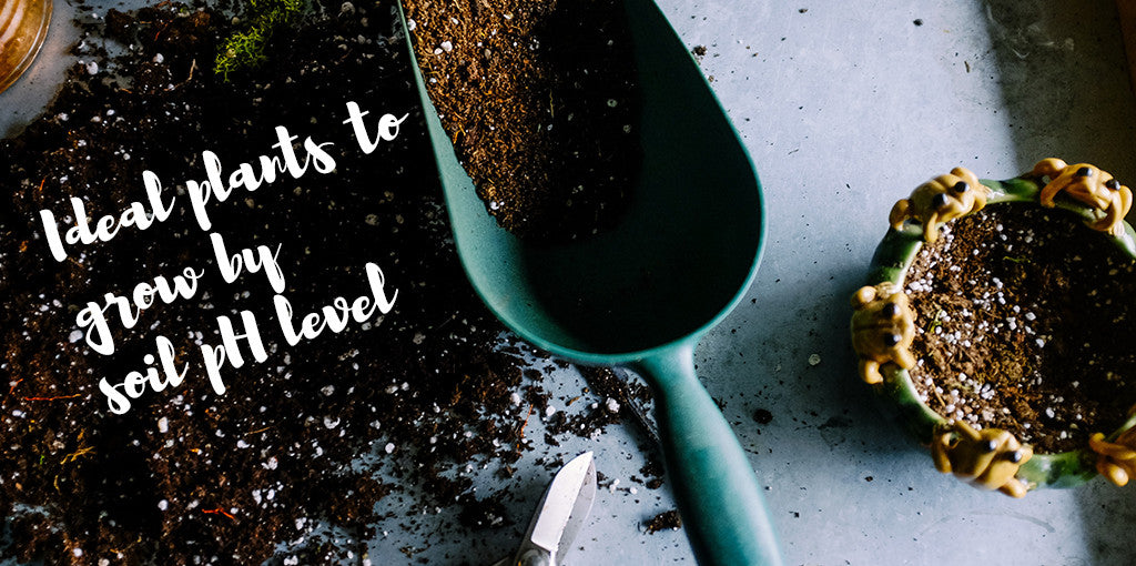 Ideal plants to grow by soil pH level