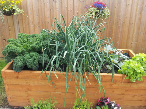 Vegetables that can grow in small spaces